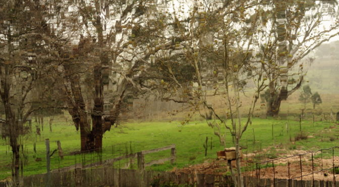 The New Chooks and yet more rain