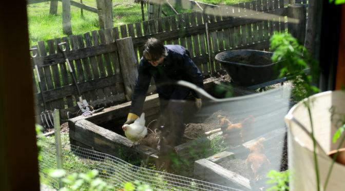 Stuart, Gardening and Chooks