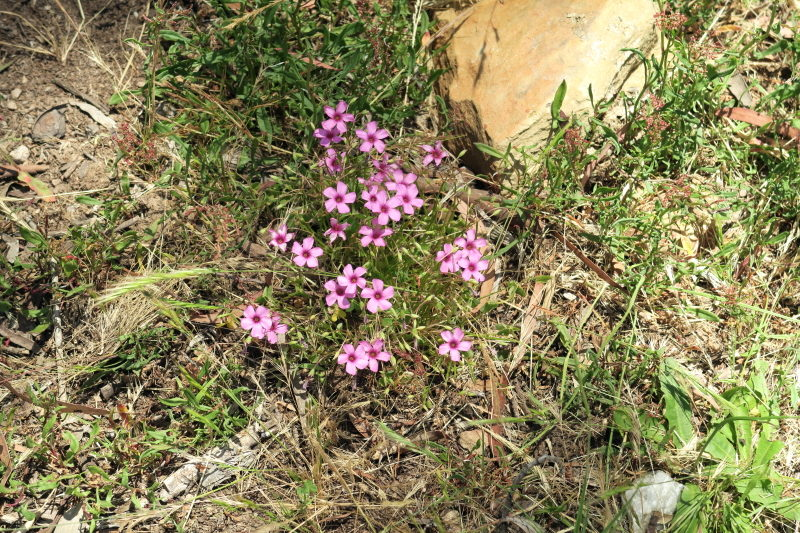 4 - the odd flower does find its way into the lawn and adds that little challenge.