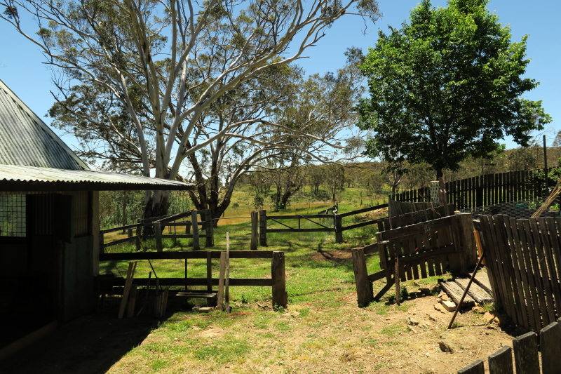 13 - another area that has to be mown, somehow. The outer chook enclosure.